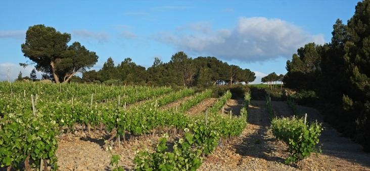 Vignoble de la Clape - Hôtel du Mas***
